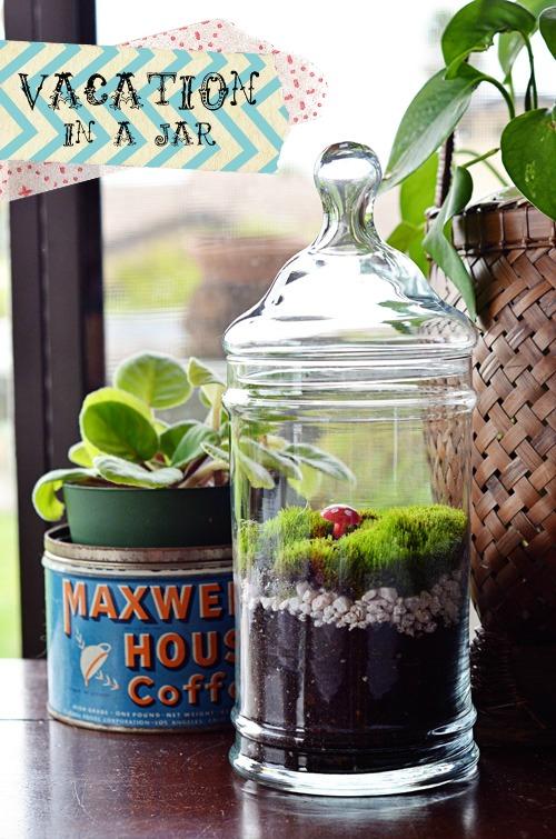 50+ Succulents, Terrariums and Creative Planters