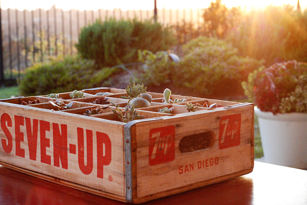 Vintage Crate Succulent Planter - A Golden Afternoon: Simplified Home Living