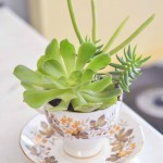 Make: A Succulent Teacup Planter